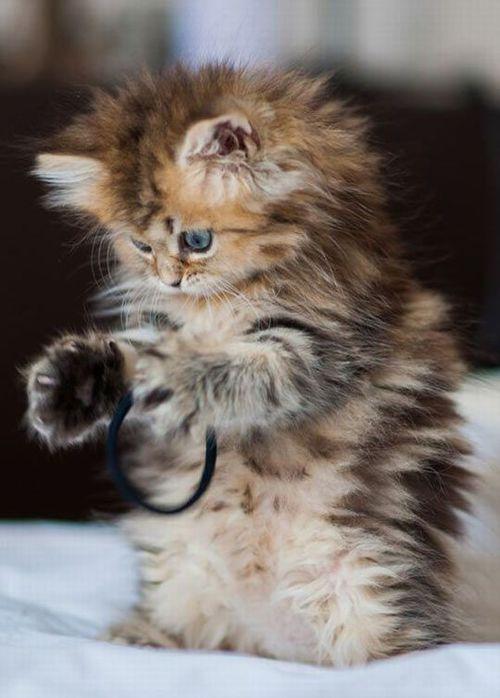 http://kitten-kaboom.tumblr.com/post/116943301175