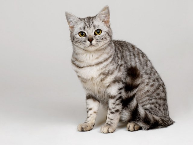 © http://www.bhmpics.com/walls/cat_striped-normal.jpg