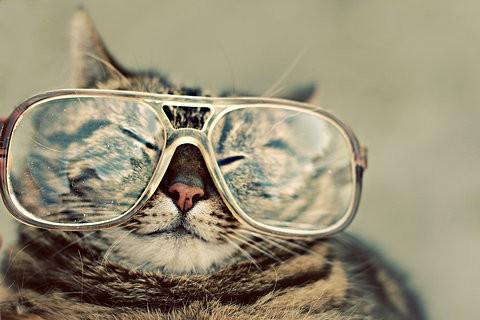 Cats-6.jpg