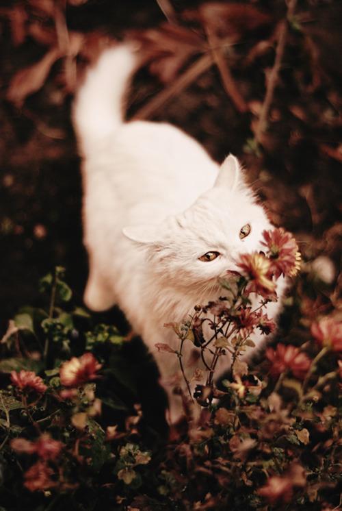 boho-cat-flowers-grunge