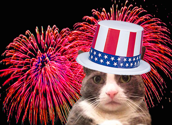 fourth-of-july-cat-petie