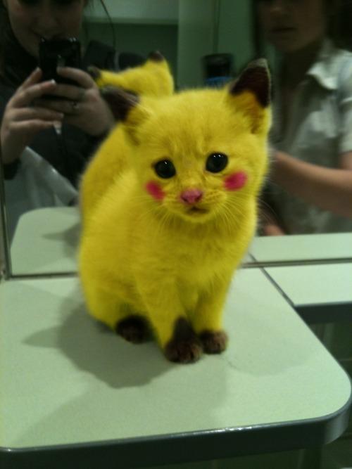 Pikachukitty