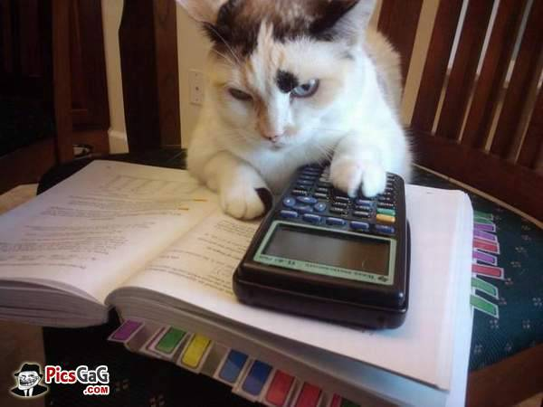 back-to-school-funny-cat