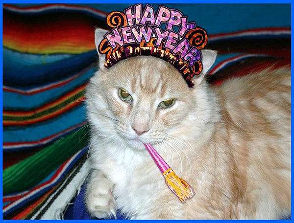 cat-new-year-2