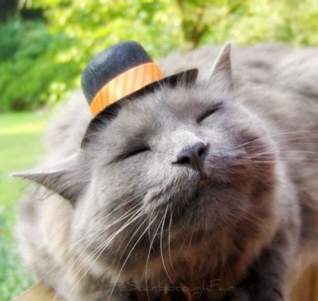 cat-with-a-hat.jpg