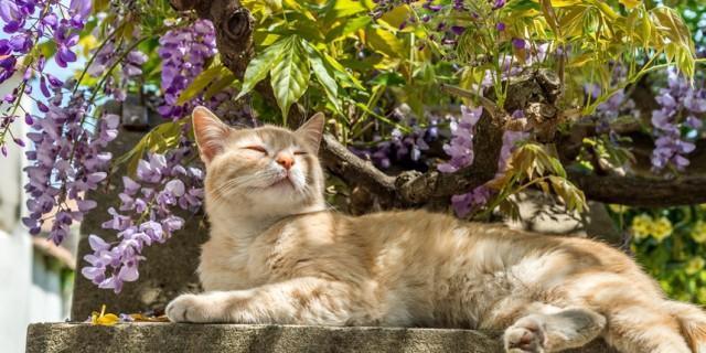 cat-garden-blog-858x429.jpg