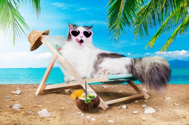 cat-in-summer.jpg