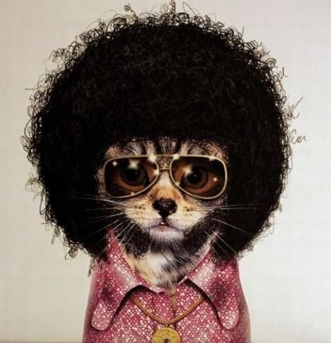 854d16f434c485d979e2cf0eaea0647d--funny-cats-funny-animals