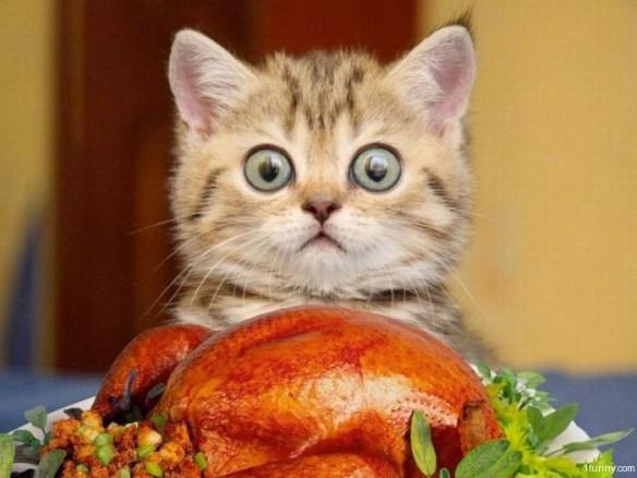 turkey-kitten