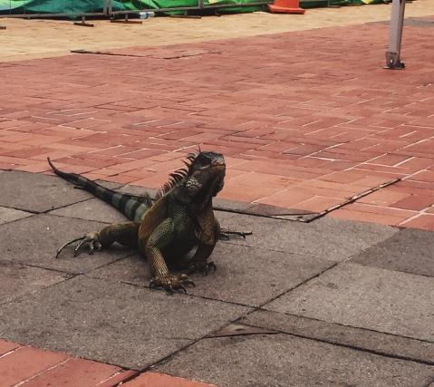 Guayaquil Ecuador Travel Blog
