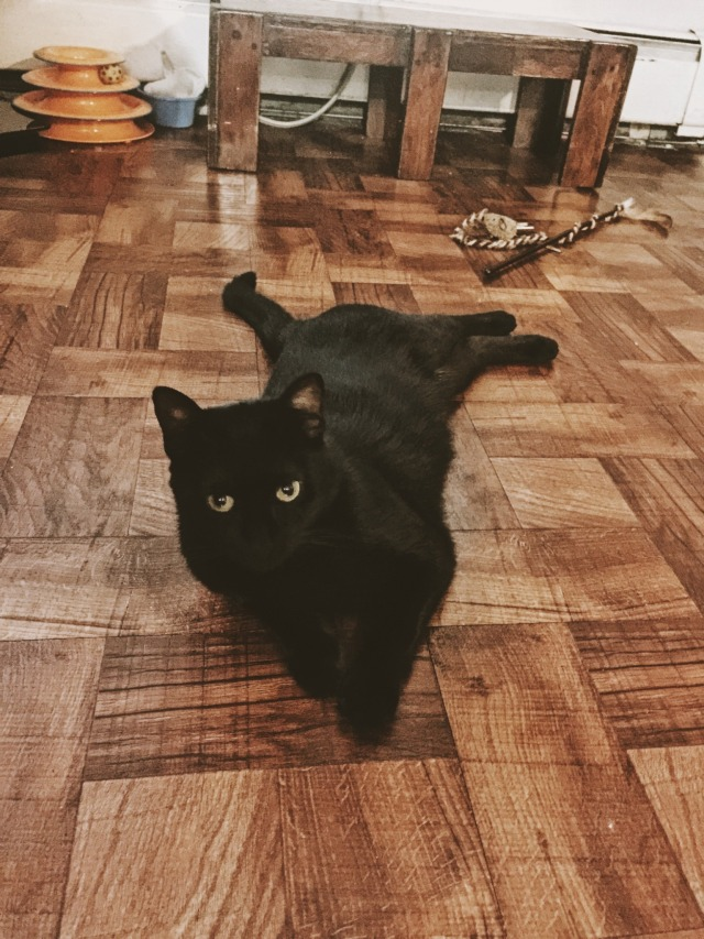 Black Cat named Negra